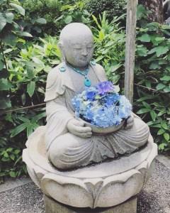 Hydrangea, Kamakura, Japan