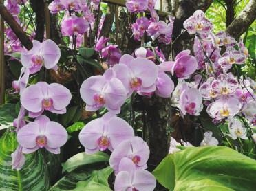 Botanic Gardens 6
