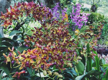 Botanic Gardens 8