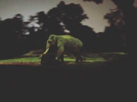 Ngiht Safari 4 - Elephant