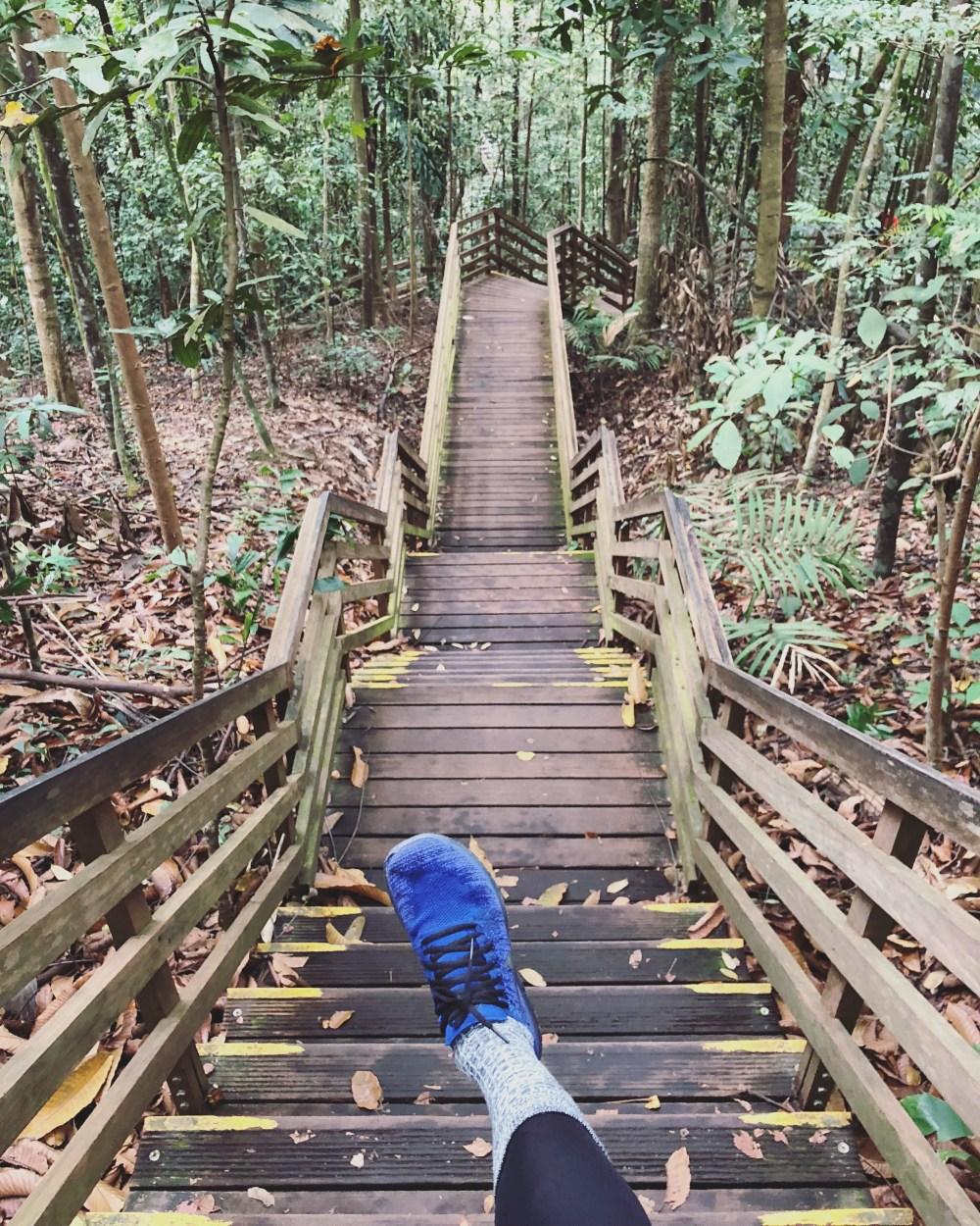 TreeTop Walk 4