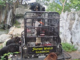 9 Go Nature Safari Thailand 4