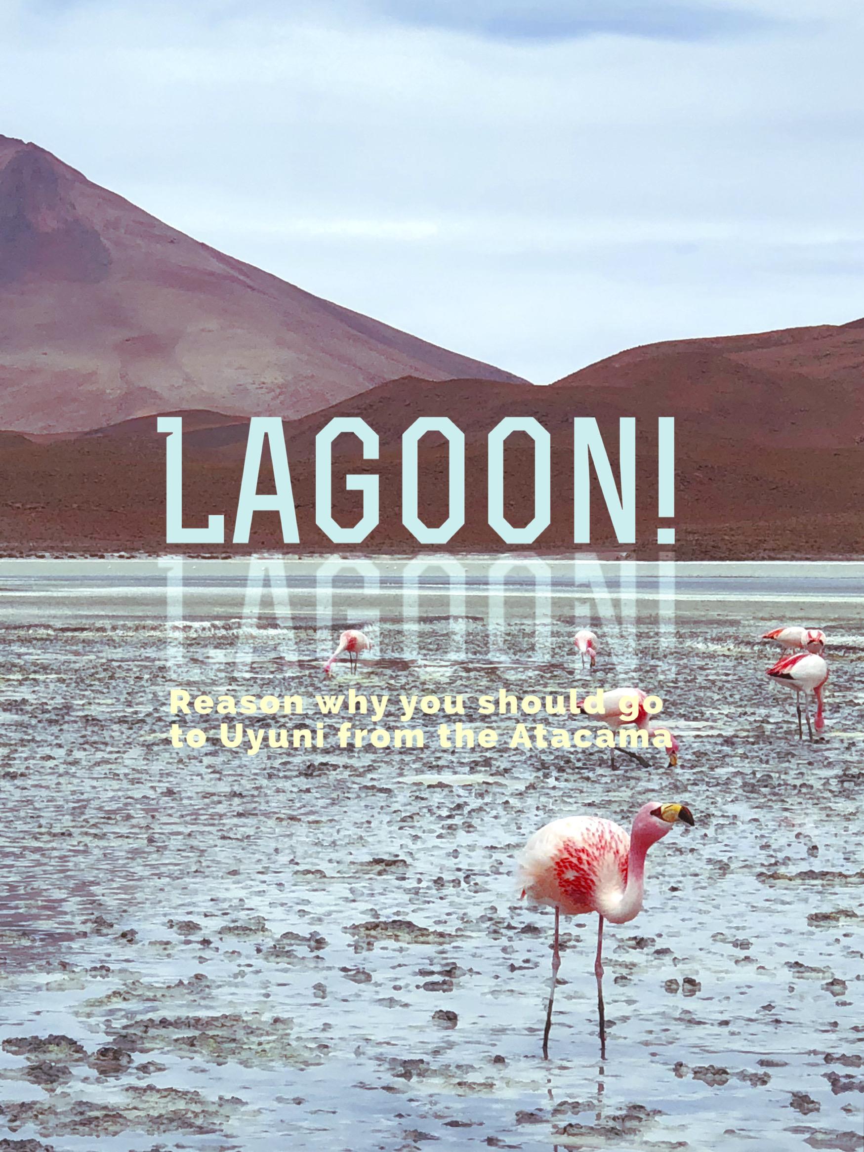 Lagoon! Lagoon! Reasons Why You Should Go to Uyuni from the Atacama