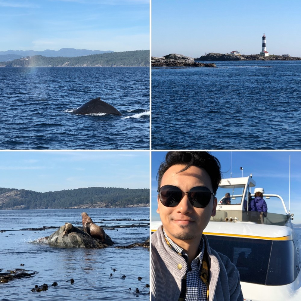 3 Whale Watching