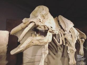 5 Drumheller - Royal Tyrrell Museum 20