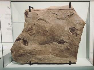 5 Drumheller - Royal Tyrrell Museum 6