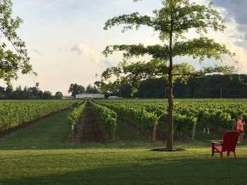 5 Wineries of Niagara on the Lake 2 pellar