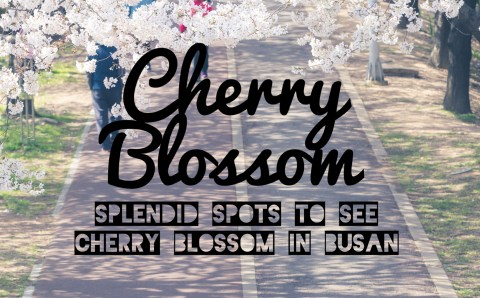 Splendid Spots to See Cherry Blossom in Busan