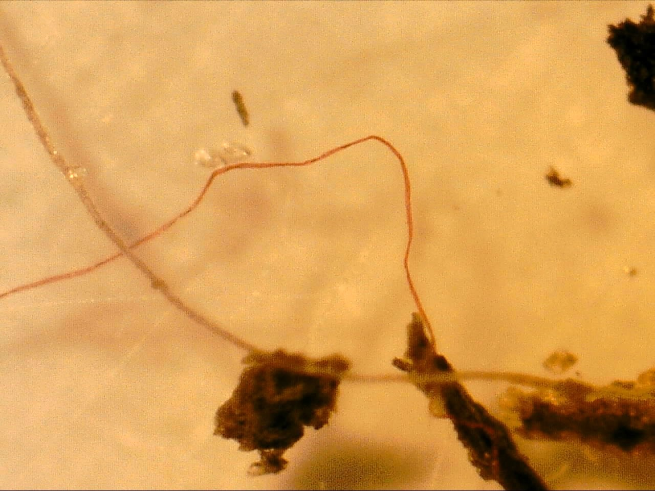 Examples of microplastics found in sediment and water samples