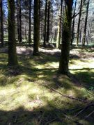 foret3