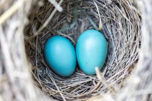 nest-egg