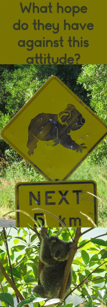 Vandalised sign alerting drivers to be on the lookout for koalas.