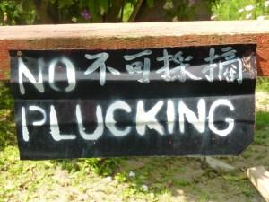 No plucking!