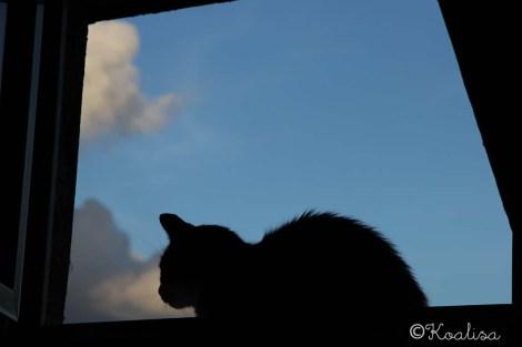 mouss @window