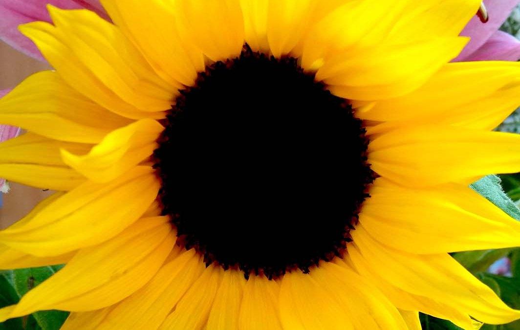 Flower Power 2015 #4