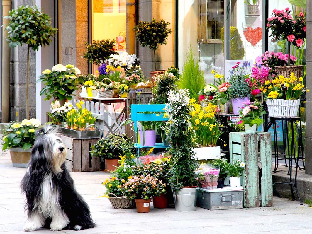 chien fleuriste