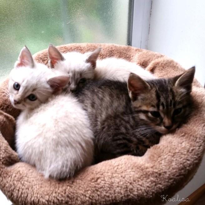 chatons 2