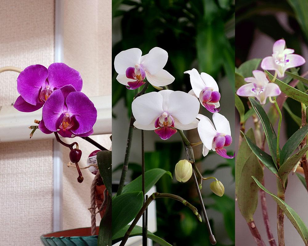 美容室の胡蝶蘭