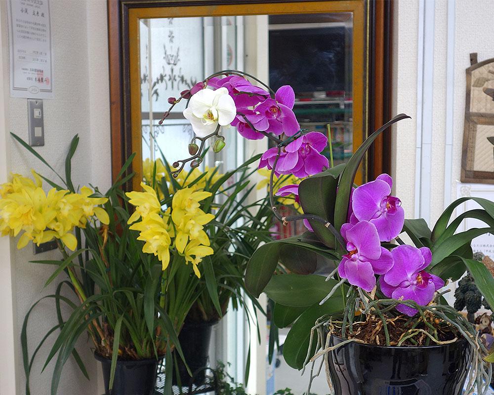 美容室の胡蝶蘭とシンビジューム