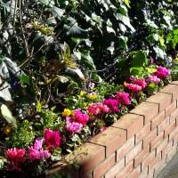 冬用花壇の植え替え