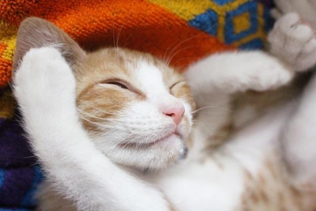 映画『猫は抱くもの』のフル動画を無料視聴出来る方法!Pandoraやデイリーモーションでも観れる?