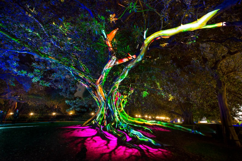 Vivid 2016 at the Royal Botanic Gardens