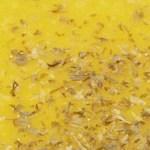 【動画あり】ひょうたん型のかぼちゃ バターナッツで絶品ポタージュ