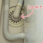 【動画あり】洗濯機の排水口のお掃除に挑戦!歯ブラシ1本で完了♪