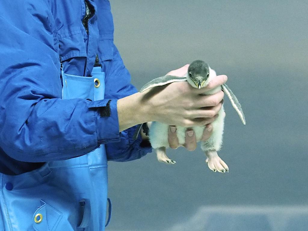 Peguin Baby