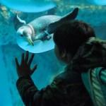 【八景島シーパラダイス】7種類のペンギンに会える!4つの施設が楽しめる水族館(ペンギン編)2017/2/17