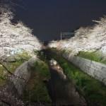 山崎川の桜 ライトアップ(名古屋市瑞穂区)2017/4/3