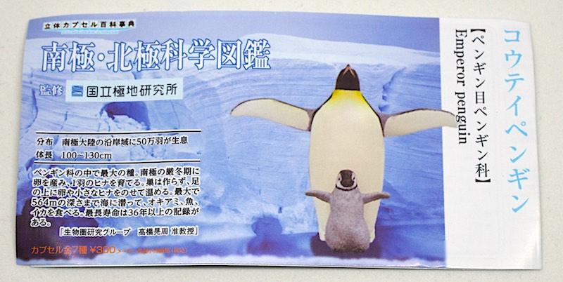 Antarctic Figure