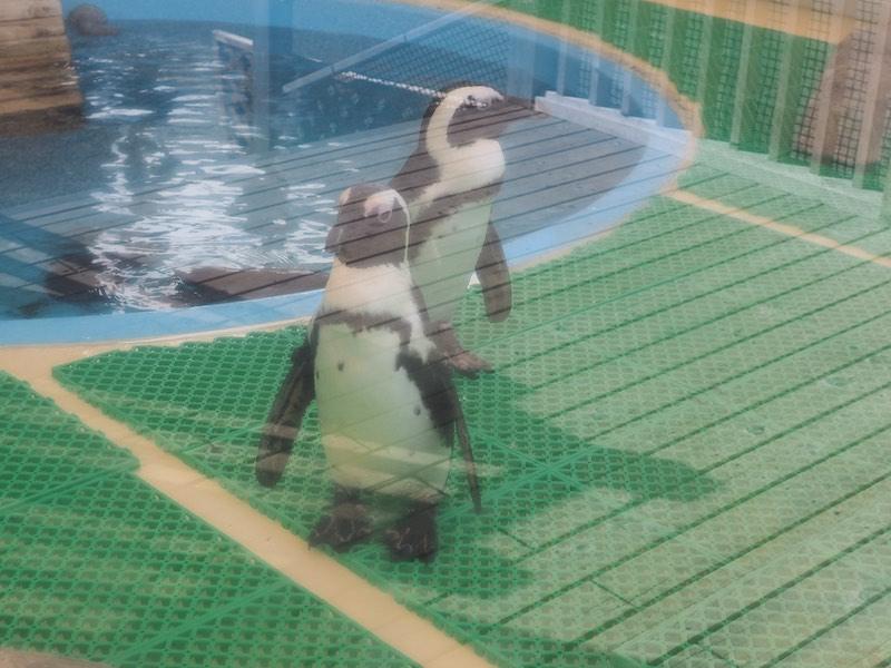 Nagoya Aquarium Penguin