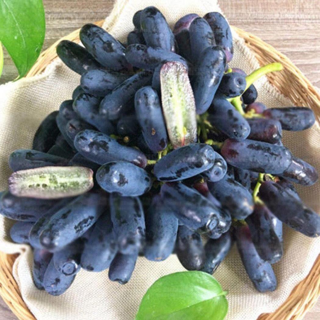 Black-Finger-qora-barmoq-Uzum-ko'chatlari