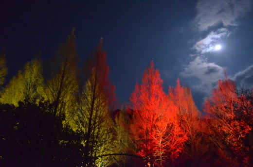 『光のフェスタinモネの庭2016』が素敵すぎる!