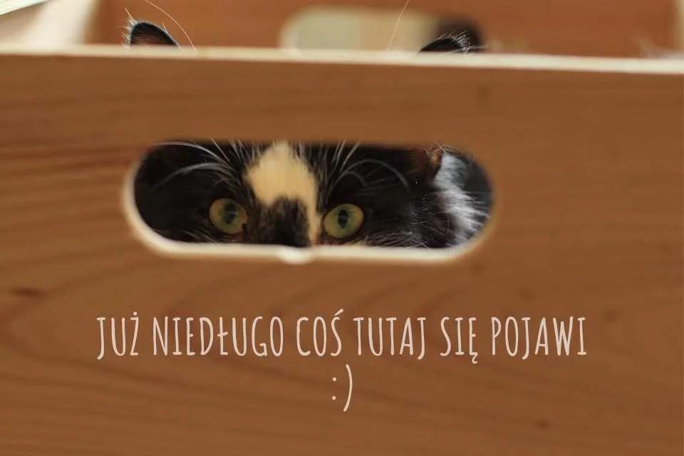 Kot patrzy przez uchwyt w pudełku.