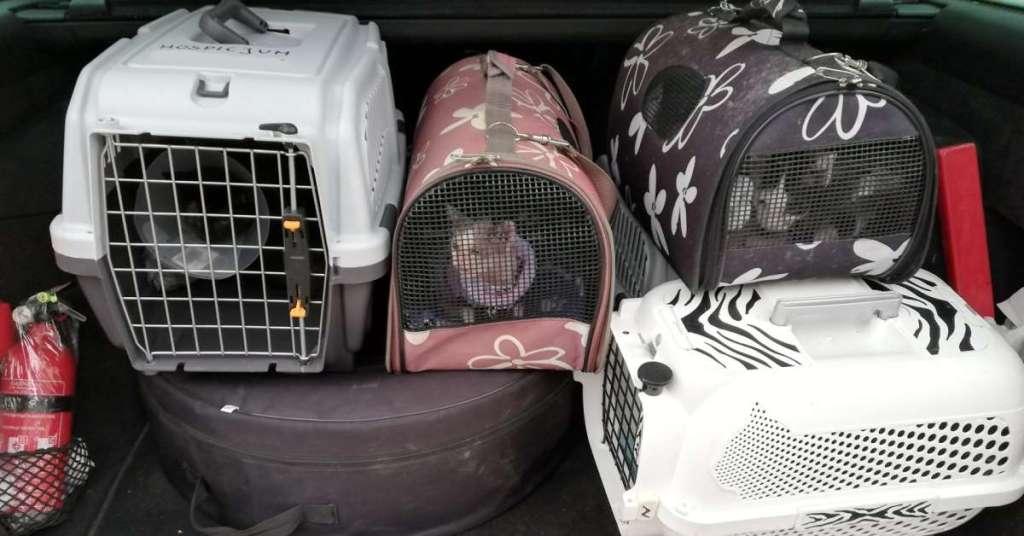 Transport kotów do lecznicy weterynaryjnej.