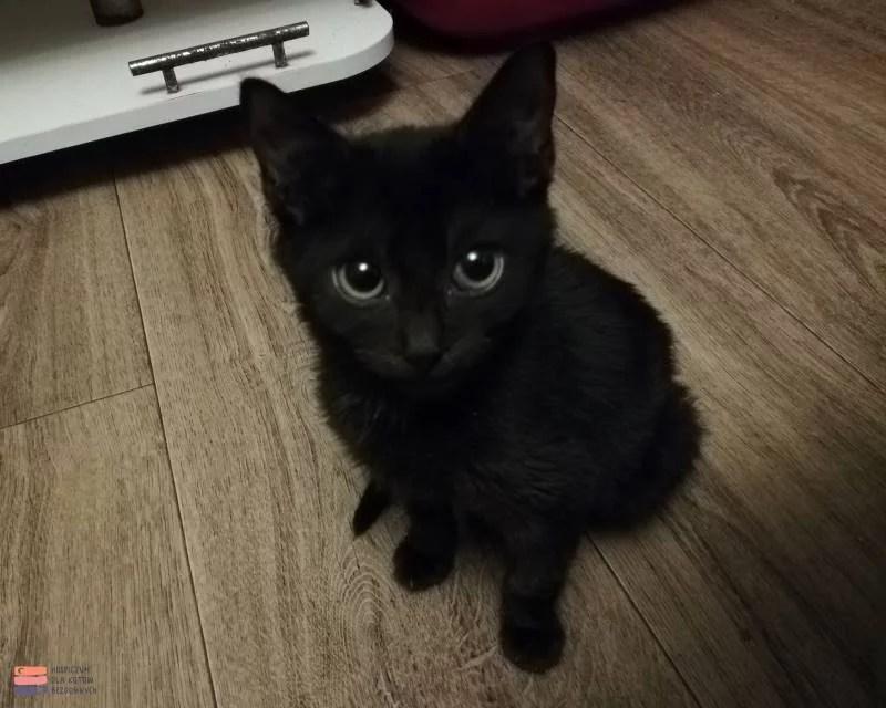 Czarny kotek Paszko siedzi na podłodze.