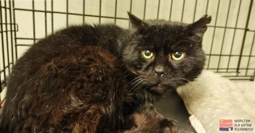Czarny kot Magnus w klatce kennelowej.