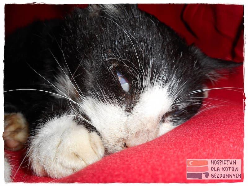 Koci staruszek, czarmy z białym pyszczkiem i łapkami, leży w Kocim Hospicjum na czerwonym kocyku