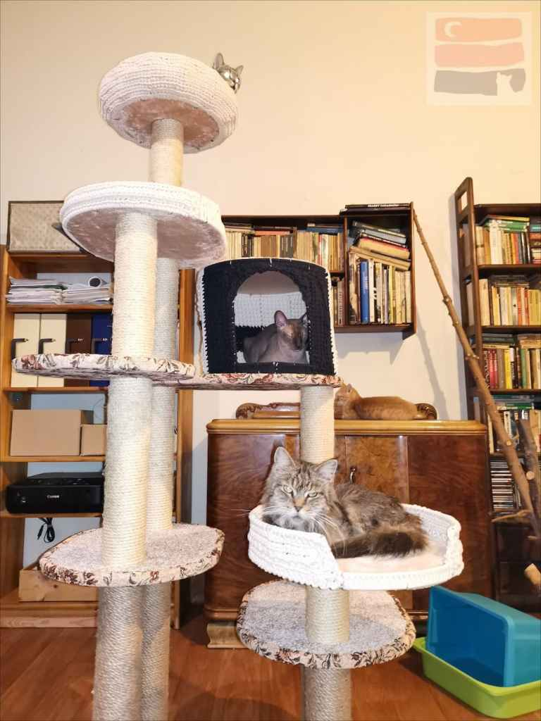 Koty wylegują się na drapaku w Kocim Hospicjum.