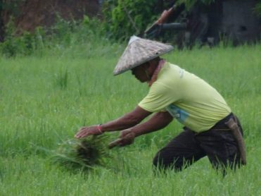 Next to fisherfolk, farmers belong to the poorest sector in the Philippines. Photo by Lito Ocampo, used with permission