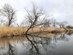 釧路湿原画像