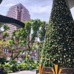 真夏のクリスマスツリー