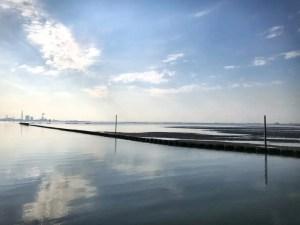 東京湾干潟
