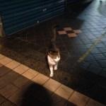 三多屋の猫