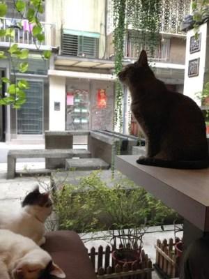 台湾の猫カフェ『極簡』に子連れで行ってきた 写真多めで猫天国をレポ