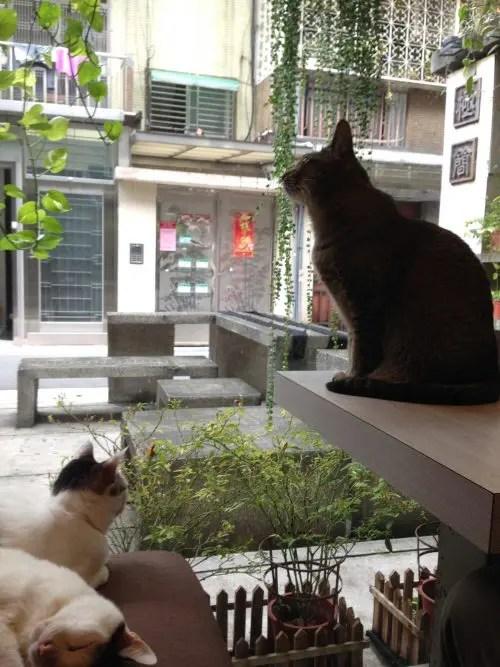 台湾猫カフェ『極簡』の猫ちゃん