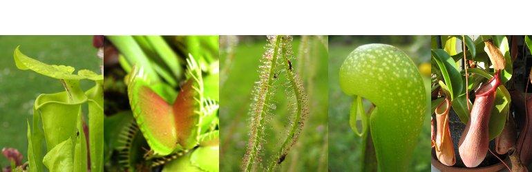 www.kødædendeplanter.dk
