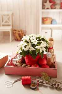 2017 Weihnachtsstern Geschenk 03